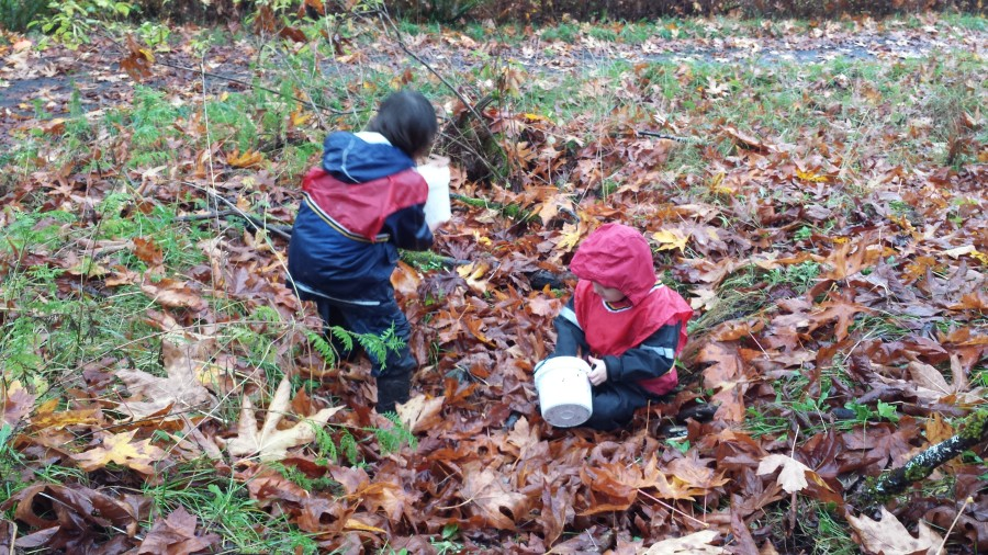 Compressing and gathering leaves in buckets