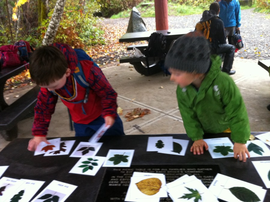 Leaf cards for matching