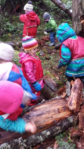 So while the stump was being broken down, some girls decided to build a bug home instead from pieces of bark and wood. A positive solution to their upset feelings around the bugs' home being destroyed. Those quickening the break down of the stump offered that they might build a new home for the bugs too, or that the insects might just if they couldn't live there any more. Did the amount of dead trees and the bugs that inhabited them encourage more birds in the area?