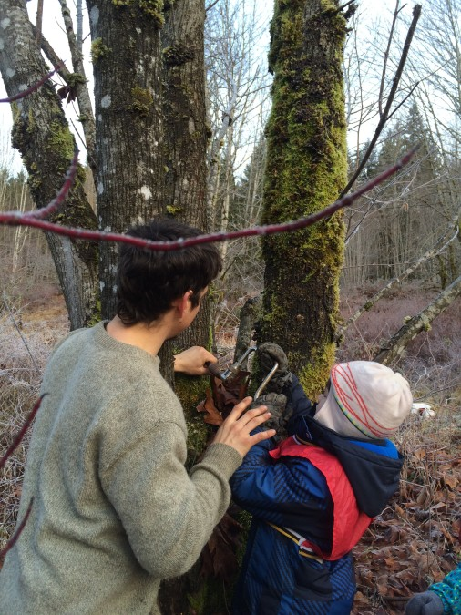 Ben shows Theo how to drill into the tree slowly, and at an angle so the sap drip downwards.