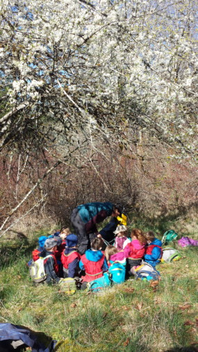 The first day back the children saw this beautiful cherry tree with its blossoms and wanted to hang out there, have snack and enjoy the sun. In giving the children agency over where they play and learn
