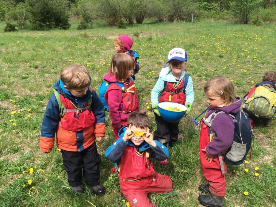 Here Delilah carries the bowl for the whole group to put their dandelions in for making dandelion jelly. What a fun way to spend part of a sunny morning!