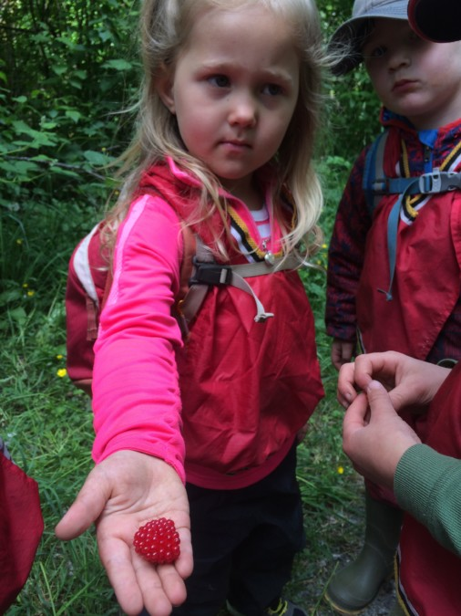 Identifying and munching on Salmon Berries has been a delightful treat this month!